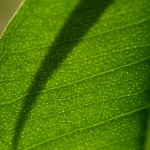 One (or two) Word Wednesday: Photosynthesis, photoshminthesis